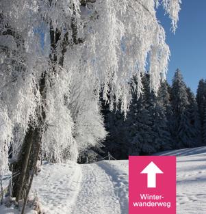 Scheidegg hat verschneite Winterwanderwege.